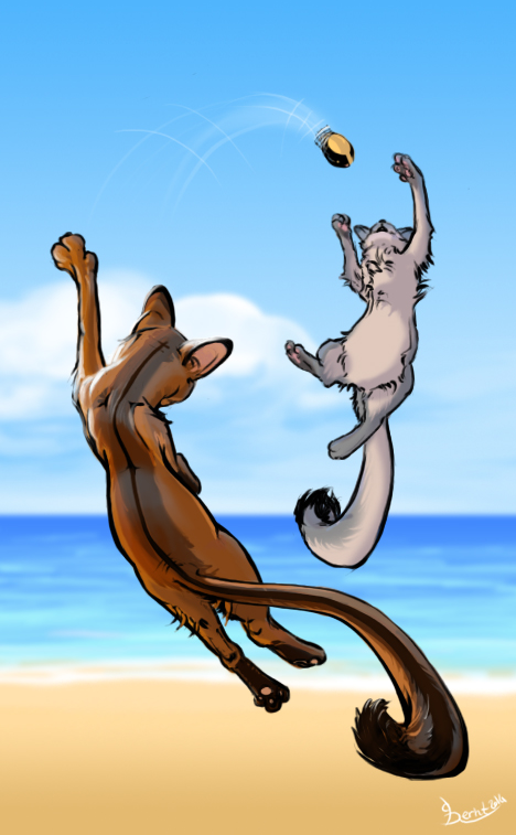 Cat_Beach_Volley-02