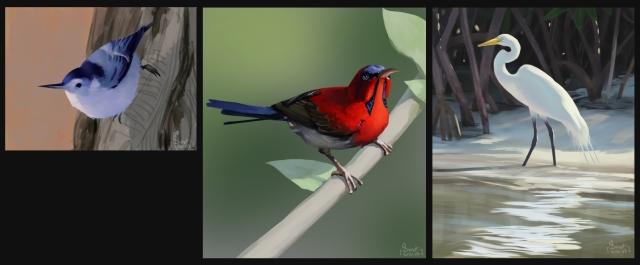 bird_study_all
